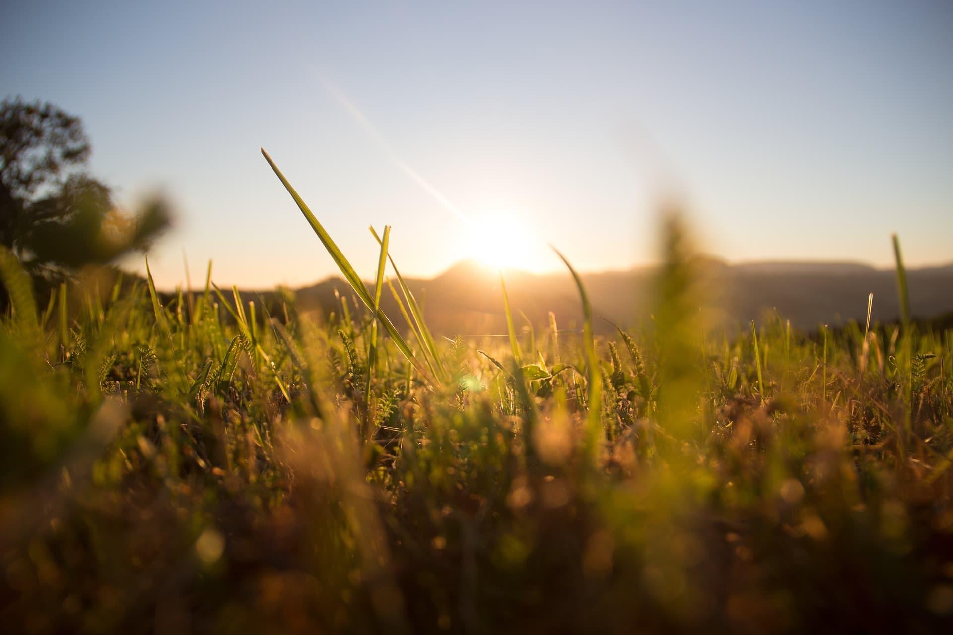 Naturbewusstseinsstudie: Deutsche sind für Schutzgebiete und gegen Gentechnik in der Landwirtschaft