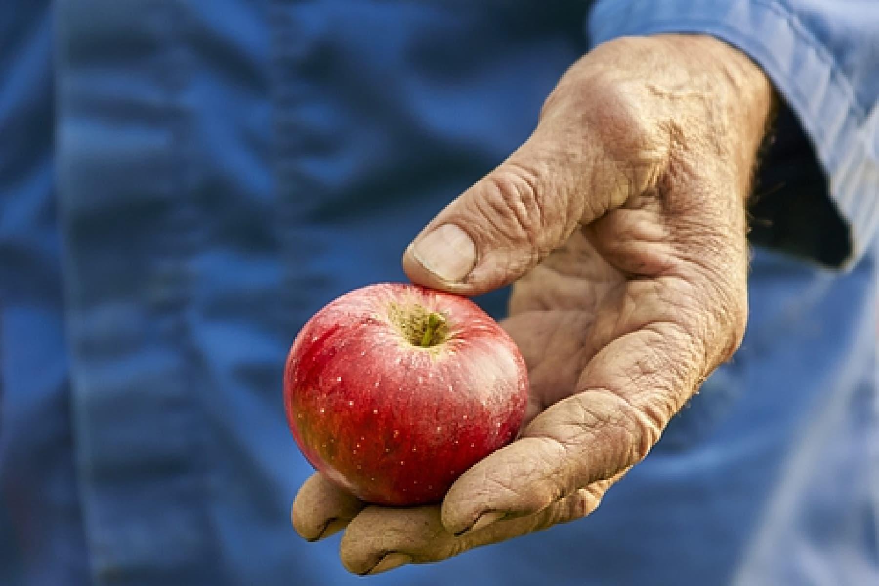 Studie zum Apfel