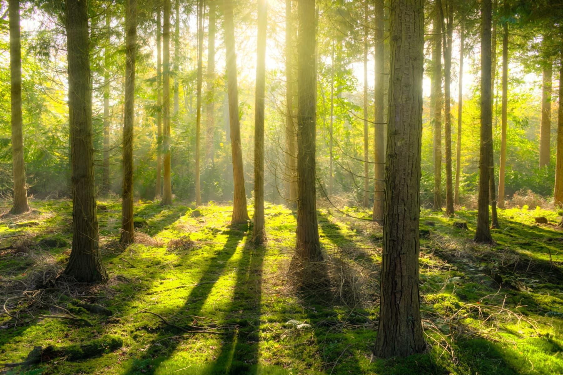 Studie: Die deutschen sind eher besorgt um den Zustand der Wälder